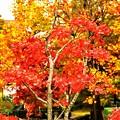 Tiny Piece of Autumn ~紅葉~