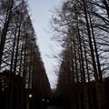 Photos: 冬の散歩道~A Hazy Shade Of Winter~