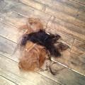 Photos: 私とRISAの髪