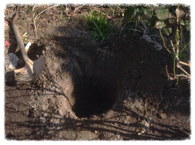 穴掘り(クレマチス植え付け)