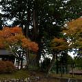 写真: 秋の荻ノ島