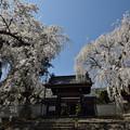光林寺の春