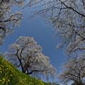 春を告げる花たち