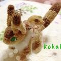 写真: コハクとテト