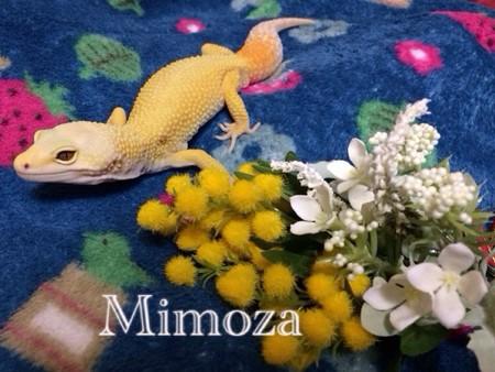 ミモザと花束
