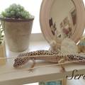 写真: 星蓮とハオルチア
