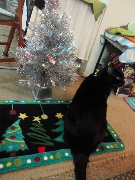 Ekkun&ChristmasMat-Dec2012-2