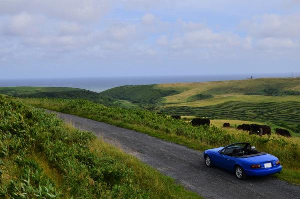 最果ての岬と細い道と緑の丘とたくさんの牛さんとマリナーブルー