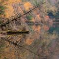写真: 倒木と紅葉