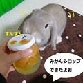 Photos: シロップ3