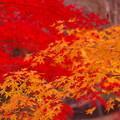 写真: 秋・・・燃える♪