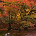秋景色が過ぎて行く・・・。