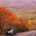 写真: 紅葉ロード♪