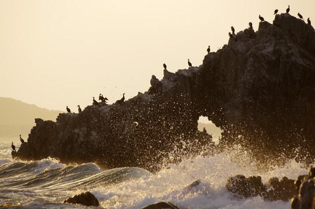 玄界灘と海鵜♪