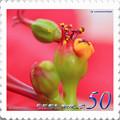 <花切手*ポインセチアの花>