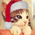 写真: クリスマス用Twitterアイコン