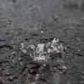 儚い雪の結晶