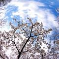 Photos: 地球が桜になった日