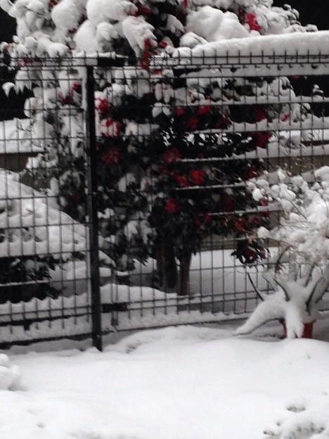 写真: 雪がまだまだ降る