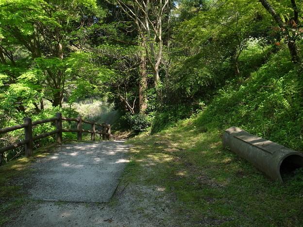 立久恵峡の遊歩道