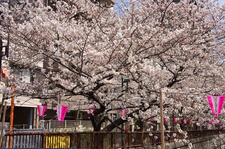 目黒川の桜・その1