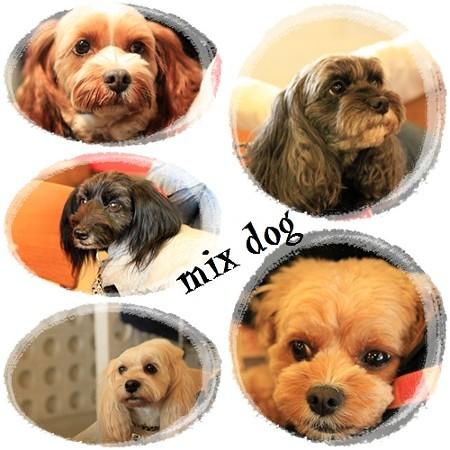 mix dog
