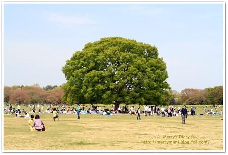 この木なんの木?!