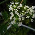 この花の名前は?
