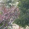 写真: 紅梅に降る雪