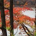 24.11.16月山池の紅葉