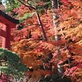 25.11.22志波彦神社鳥居付近の紅葉