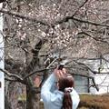 Photos: 26.3.29榴岡公園の梅