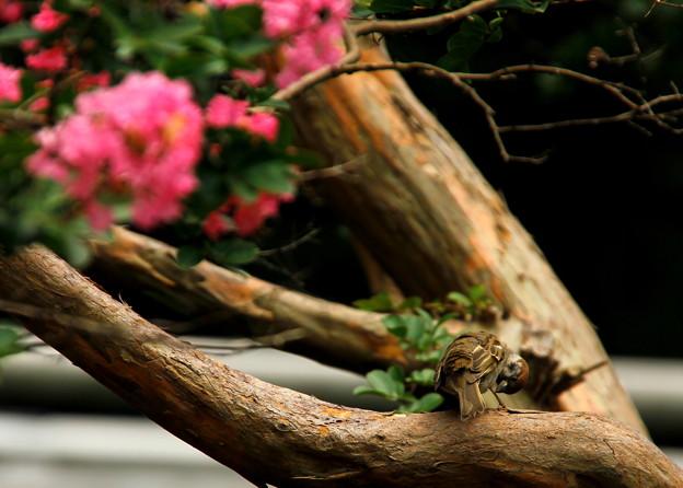 写真: _MG_0048京都