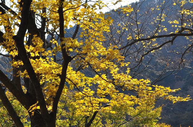 写真: 黄のこころ