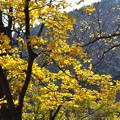 黄のこころ