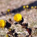 Photos: ねエ~~みんな春ですよ~~
