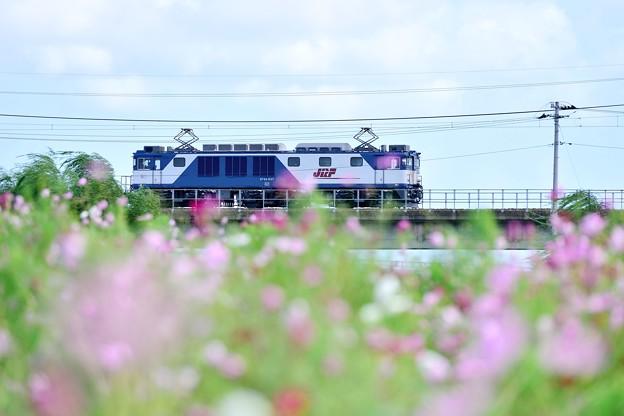 Photos: EF64-1037 登り