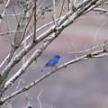 2度目の青い鳥