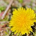 Photos: ここにも春