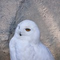 Photos: 本当に白い・・・