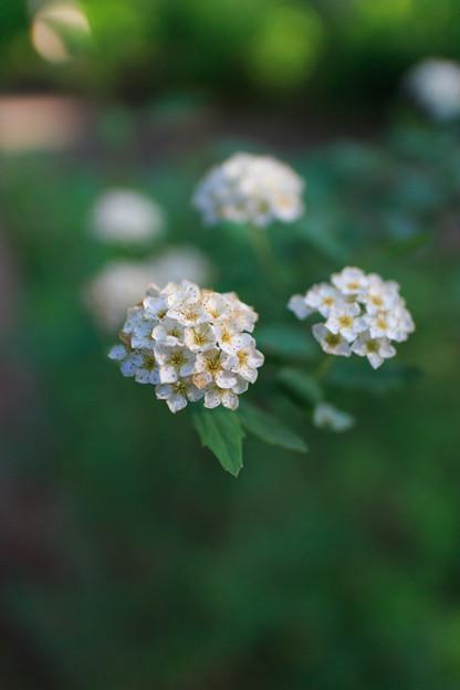 豊平公園の花