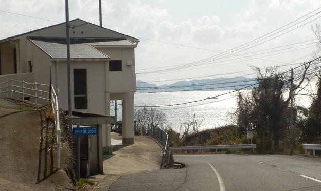 写真: 灘黒岩水仙郷15