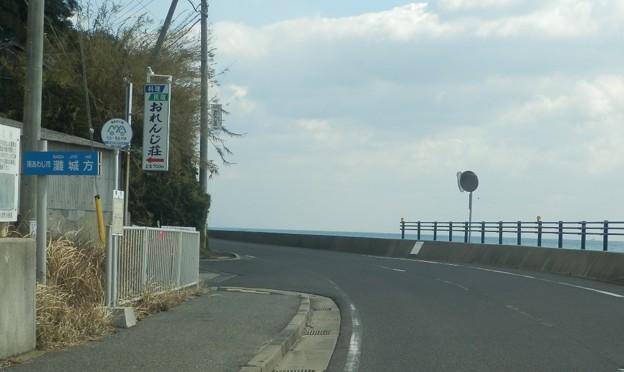 写真: 灘黒岩水仙郷20