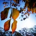写真: 秋来ぬと目にはさやかに