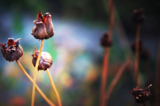 写真: 色づく秋