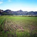 写真: 播磨平野の岩山