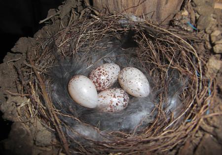 四個目の産卵
