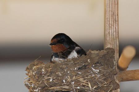 この巣もいいですね