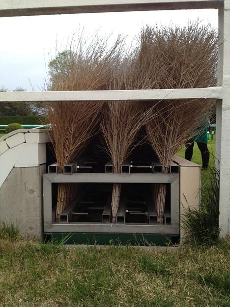 竹柵障害の横はこうなっています - 写真共有サイト「フォト蔵」